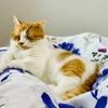 飼い主の足とは、愛猫の枕です。