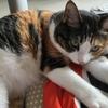 【愛猫日記】毎日アンヌさん#22