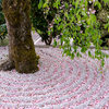 京都・一乗寺 - 桜散る 圓光寺