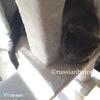 【子猫との過ごし方】もらって嬉しかった猫のおもちゃーキャットタワー*クリスマスプレゼントのひみつ*