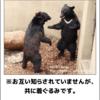動物園(落語)