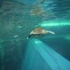 福島浜通り満喫ドライブ 1日目(2008年の旅行記 アクアマリンふくしまといわき湯本温泉)