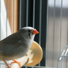 小鳥あるある?