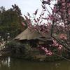 早春のなんちゃって登山 春の訪れを感じる京都松尾山を歩き、最後はネコ!