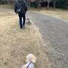 三重のお散歩〜亀山サンシャインパークの河津桜🌸