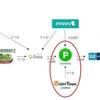 【LINEポイントルート】ポイントタウン⇒LINEポイントの交換を図解
