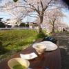 秋篠川の桜(3月下旬~4月上旬)