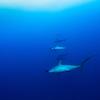 年末無人島0円生活SP:ナスDのサメ釣りのノウハウ。また、彼が愚痴を言わない理由に心を震わせ。3匹のサメに襲われるシーンはホラー映画さながらの迫力。やはりナスDパートは面白かった!!