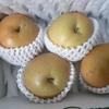 アドバンスクリエイトから梨(豊水)を頂きました。