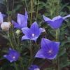 9 月13日誕生日の花と花言葉歌句