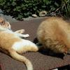 二人乗り  いろいろとほんとのところ  猫