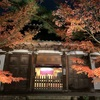 京都 永観堂🍁紅葉ライトアップ写真