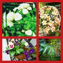 つる植物の園 ~Vine garden~
