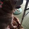 保護犬ニコちゃんとご飯