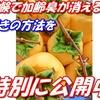 柿渋エキス効能に衝撃のカキタンニン効果とは?