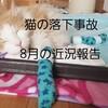 猫の落下事故!!8月の近況報告について