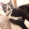 本日の猫様からのお告げ~1/1の星占い~