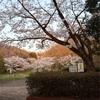 多摩川桜百景 -22. 都立桜ヶ丘公園-