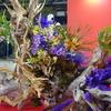 世界らん展2020(7)~ 至宝の蘭、ディスプレイ、お買い物