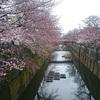 3月20日(火)成田で食べた2杯のきつねそばと、石神井川沿いの二分咲きのソメイヨシノ。