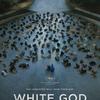 ハンガリー映画「ホワイトゴッド 少女と犬の狂信曲」感想ネタバレ:動物に対する不当な扱いについて考えてみる
