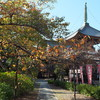 光悦ゆかりの本法寺(菩提寺)、清明神社、大徳寺、今宮神社などを訪ねてみた