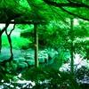 【新緑の新宿御苑】言の葉の庭 舞台探訪(聖地巡礼)