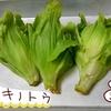 フキノトウでペペロンチーノを作ってみた【熟女の野菜生活】