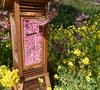 【河津桜まつり】少し早めの花見
