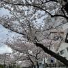 お花見@大井水神公園・2021年3月28日