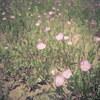 荒れ地の花畑
