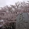天童桜まつり人間将棋と舞鶴山の桜をご紹介!🌸