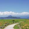済州島(チェジュ島)9月のおすすめスポット #コスモス #そばの花 #ピンクミューリー #コンサート