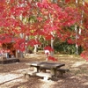 松栄堂さんのお香と秋の京都で香りと色に癒される