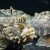 冬季営業中のおたる水族館で撮影!JR北海道の「おたる水族館きっぷ」がお得