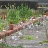 7月11日(土)森ケ崎ではコアジサシ幼稚園が開園中です
