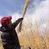 茅刈り初体験