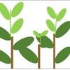 お茶の樹を刈り整えるナラシ作業の目的について