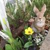 ウサギちゃん喜ぶ!