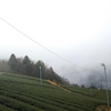 久しぶりの雨と霧の午前中