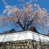 四月の慈雲寺の催しのお知らせ