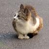 6月5日 堀切 小菅 千住の猫さま とその情景