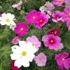 お花たちからパワーをいただいて♪ 自然を肌で感じてみませんか。
