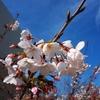 旅に出られない旅人はどうなってしまうのか<その41>「桜と海。久しぶりの旅が、しっとりと心に焼き付いた話」