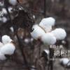 二十四節気七十二候 「処暑 天地始粛」(2017/8/28)
