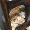 猫は目を開けて寝ることがあるみたいです。白目じゃないのでまだ可愛い