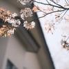 2021年 桜満開