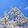 「春分の日」宇宙エネルギー・お電話セッションのお知らせ