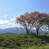 安曇野「常念道祖神」と桜の絶景。