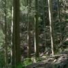 43 飛鳥、奈良時代の道路